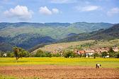 Bulgarische wiese — Stockfoto