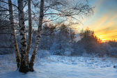 Winter sunset — Stock fotografie