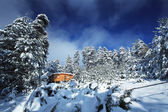 Bulgarian winter forest — Stock Photo