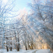 Royalty-Free Stock Photo: Winter vertical landscape