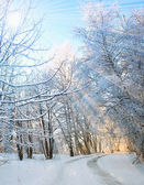 Winter vertical landscape — Stockfoto