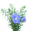 Flax blue (Linum) — Stock Photo