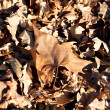 Dry leaves on ground in winter time — Foto de Stock