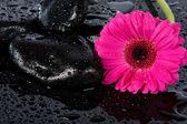 Flor rosa en superficie mojada — Foto de Stock