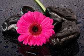 Pink flower on wet,black rocks — Stock Photo