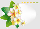 Background with frangipani flowers — Stock Vector