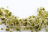 Fresh alfalfa sprouts isolated on white background — Stock Photo