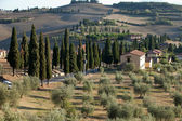 The landscape of the Tuscany. Italy — Stock Photo