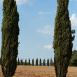 The landscape of the  Tuscany. Italy - Stock Photo