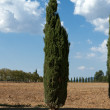 The landscape of the  Tuscany. Italy — ストック写真