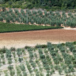 Tuscan landscape with vineyards, olive trees and cypresses — Foto de Stock