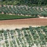 Toscaanse landschap met wijngaarden, olijfbomen en cipressen — Stockfoto #8689696