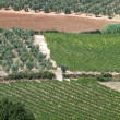 Tuscan landscape with vineyards, olive trees and cypresses — Stock fotografie