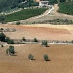 Toscaanse landschap met wijngaarden, olijfbomen en cipressen — Stockfoto #8723845