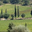 Tuscan landscape with vineyards, olive trees and cypresses — Стоковая фотография