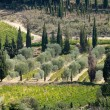 Tuscan landscape with vineyards, olive trees and cypresses — Stok fotoğraf
