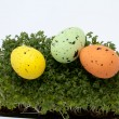 Easter eggs in fresh green cardamine - Stock Photo