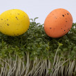 Easter eggs in fresh green cardamine - Stok fotoğraf