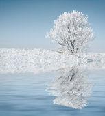 Sám zmrazené strom. — Stock fotografie