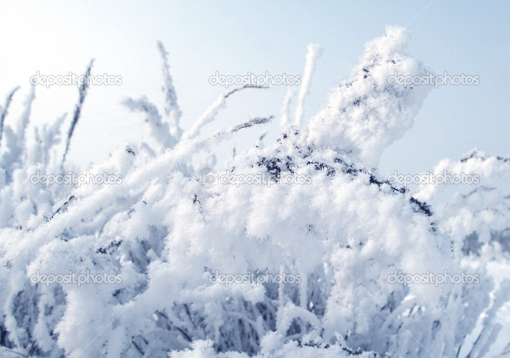 Plant in snow blue toned — Stock Photo #8233979
