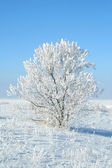 Solo árbol congelado — Foto de Stock