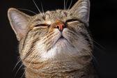 Gemengd-ras kat — Stockfoto