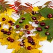 Autumn leaves and chestnuts - Stock Photo