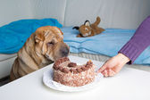 Sharpei dog with cake — Stock Photo