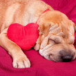 Valentine dog — Stock Photo #8910450