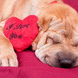 Valentine dog — Stock Photo #8965593