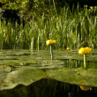 River with flowers - Stockfoto