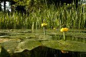 Floden med blommor — Stockfoto