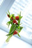 Lindas tulipas vermelhas em um vaso com a luz da janela — Foto Stock