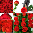 6 holiday photos with red roses - Stock Photo