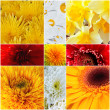 Yellow and red petals of gentle flowers — Stock Photo #8986896