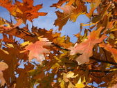 Fall Leave's close up — Stock Photo