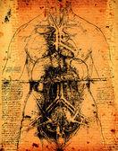 Anatomia sztuki — Zdjęcie stockowe