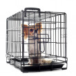 Royalty-Free Stock Photo: Chihuahua in kennel