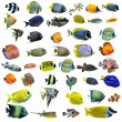 Fishes — Stock Photo #8845551