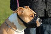 Dog and muzzle — Stock Photo