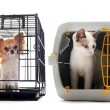 Chihuahua and cat in kennel - Stock Photo
