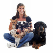 Woman and her dogs — Stock Photo
