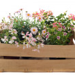 Flowers in a crate — Stock Photo