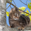 Scaring cat perch on a tree — Stock Photo