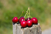 String of cherry — Stock Photo