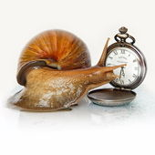 East African snail and clock — Stock Photo