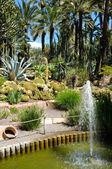 Huerto del Cura garden — Stock Photo