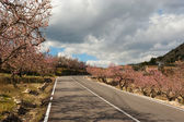 Costa Blanca during almond blossom — Stock Photo