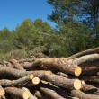Stock Photo: Forestry work