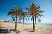 Muchavista kum plaj — Stok fotoğraf